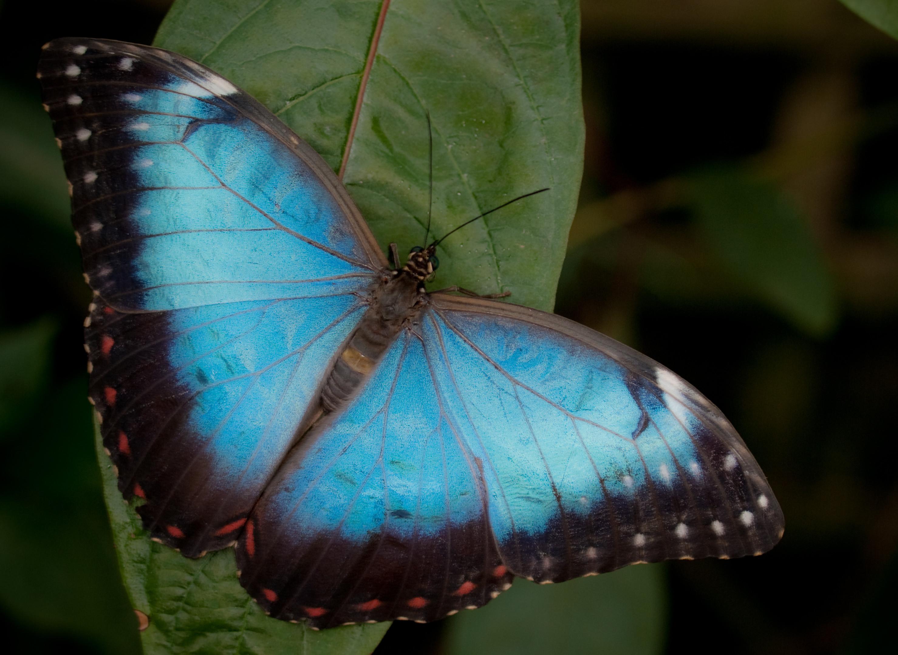 De la barbarie y del aleteo de la mariposa